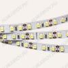 Лента светодиодная (3528*2) мультибелая RT2-5000 LUX (цена за 1м)  12V, 0.8A/м, 120 LED/м, 420Lm/м, ширина 8мм, IP33